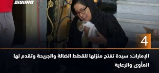 ب 60 ثانية-الإمارات: سيدة تفتح منزلها للقطط الضالة والجريحة وتقدم لها المأوى والرعاية،2019،06.17