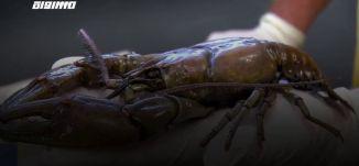 ب 60 ثانية -الولايات المتحدة: العثور على سمكة جراد يبلغ طولها 25 سم بولاية كنتاكي  24-4-2019