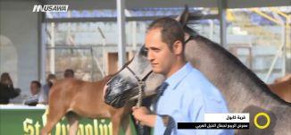 معرض الربيع لجمال الخيل العربي؛ما هي معايير اختيار جمال الخيول؟،رشاد بهنسي،23.3.2018