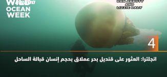 60 ثانية- انجلترا: العثور على قنديل بحر عملاق بحجم إنسان قبالة الساحل،18.7.2019