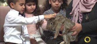 تفعيل الاطفال عن طريق الحيوانات - منار نخاش - #صباحنا_غير- 9-12-2016- مساواة