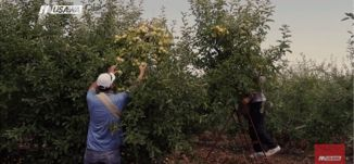 المزارع الفلسطيني بين الواقع المرير والتحديات والتهميش - الكاملة - الهويات الحمر-  قناة مساواة