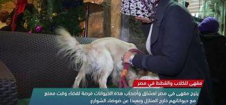 مقهى للكلاب والقطط في مصر   -view finder-  7-1-2018 -  قناة مساواة الفضائية