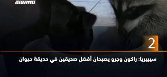 60 ثانية -سيبيريا: راكون وجرو يصبحان أفضل صديقين في حديقة حيوان 15.10.2019