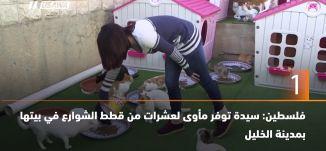 ب 60 ثانية،فلسطين: سيدة توفر مأوى لعشرات من قطط الشوارع في بيتها بمدينة الخليل،15-3-2019