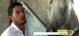 Musawachannel   تقرير   الخيول العربية   25 11 2015   قناة مساواة الفضائية