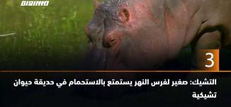 ب 60 ثانية-  التشيك: صغير لفرس النهر يستمتع بالاستحمام في حديقة حيوان تشيكية،19.6.2019