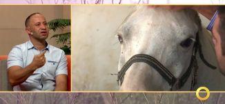 الخيول العربية الأصيلة - مهند دراوشة - #صباحنا_غير- 31-7-2016- قناة مساواة الفضائية