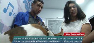 حيوانات مصرية مدللة  ،view finder -27.7.2018- مساواة