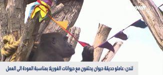 لندن: عاملو حديقة حيوان يحتفون مع حيوانات الغوريلا بمناسبة العودة الى العمل،بانوراما مساواة،21.06.20