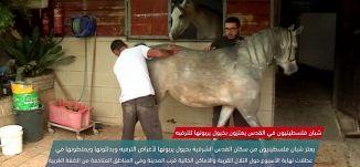 شبان فلسطينيين في القدس يعتزون بخيول يربونها للترفيه  -view finder-3-2-2018،  قناة مساواة الفضائية