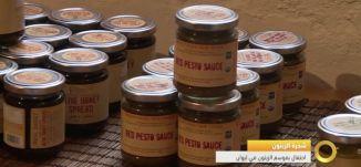 تقرير - شجرة الزيتون احتفال موسم الزيتون في  ليوان الثقافي - 21-11-2016- #صباحنا_غير- مساواة