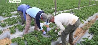 تقرير : زراعة التوت،مراسلون،20.1.2019، مساواة