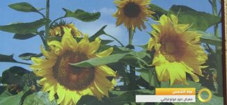 """تقرير -افتتاح معرض الصور الفوتوغرافية """"عباد الشمس - 16-11-2016- #صباحنا_غير- مساواة"""