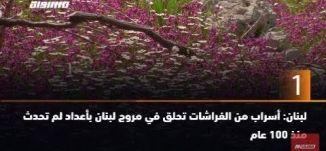 ب 60 ثانية -لبنان: أسراب من الفراشات تحلق في مروج لبنان بأعداد لم تحدث منذ 100 عام 21-4