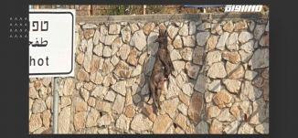التنكيل بالكلاب: صور قاسية .. فعل أقسى،شادي حلو،المحتوى، 26.08.2019، قناة مساواة