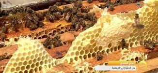 تقرير - إنتاج العسل - من الخلية الى المعصرة - #صباحنا_غير- 2-5-2016- قناة مساواة الفضائية
