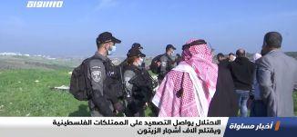 الاحتلال يواصل التصعيد على الممتلكات الفلسطينية ويقتلع آلاف أشجار الزيتون،اخبارمساواة،07.01.2021