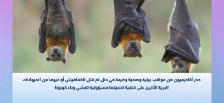 حذر اكاديميون من عواقب بيئية وصحية وخيمة في حال تم قتل الخفافيش على خلفية وباء كورونا  -الصحة والناس