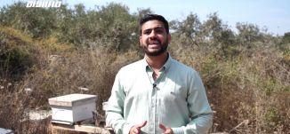 شاهين شاهين - استطاع تطوير العسل لاستخدامه في علاجات طبية  ،تقرير ،مراسلون،13.10.2019